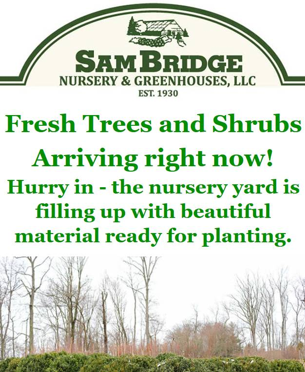 sam bridge nursery greenhouse newsletter