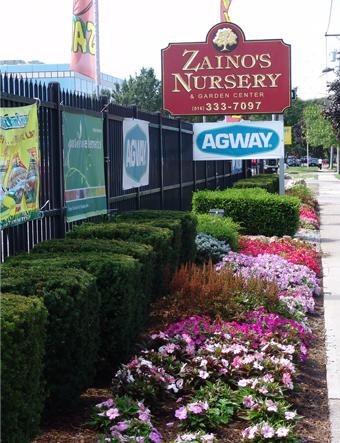 Zainos Nursery Westbury and Garden Center