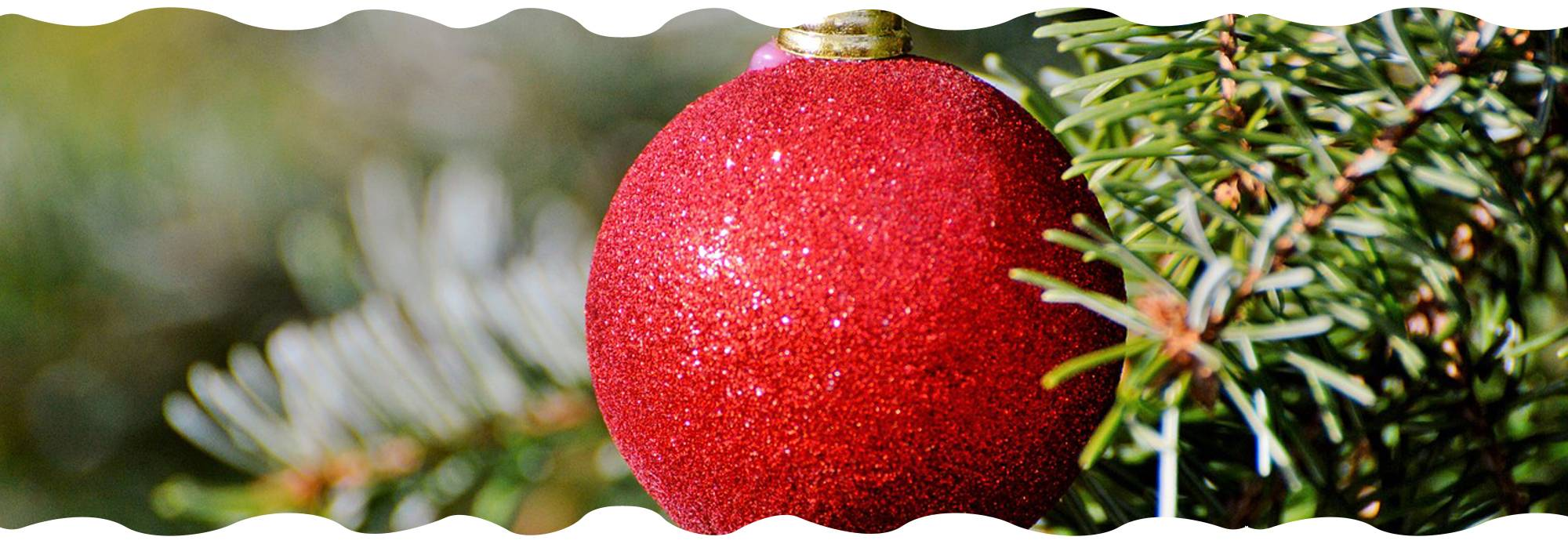 christmas-tree-campaign-gardencenternews-cost